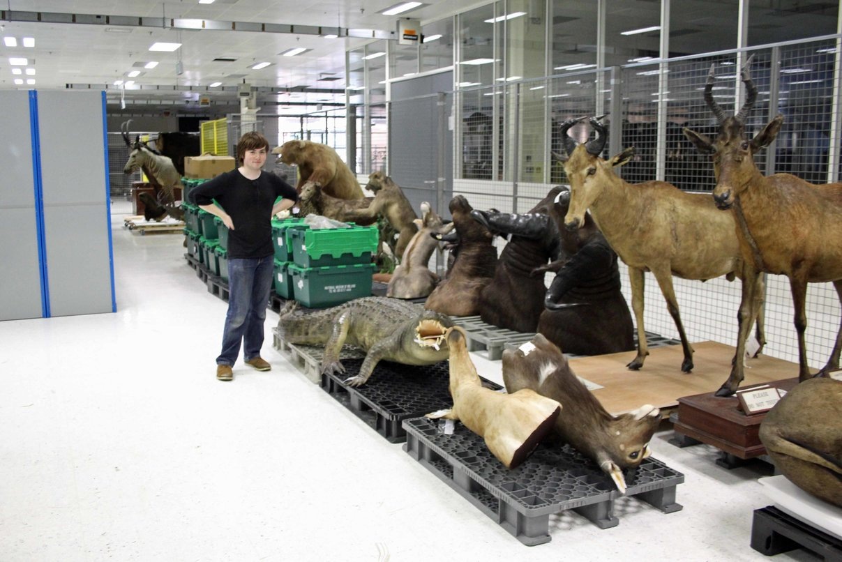rsz natural history museum dublin