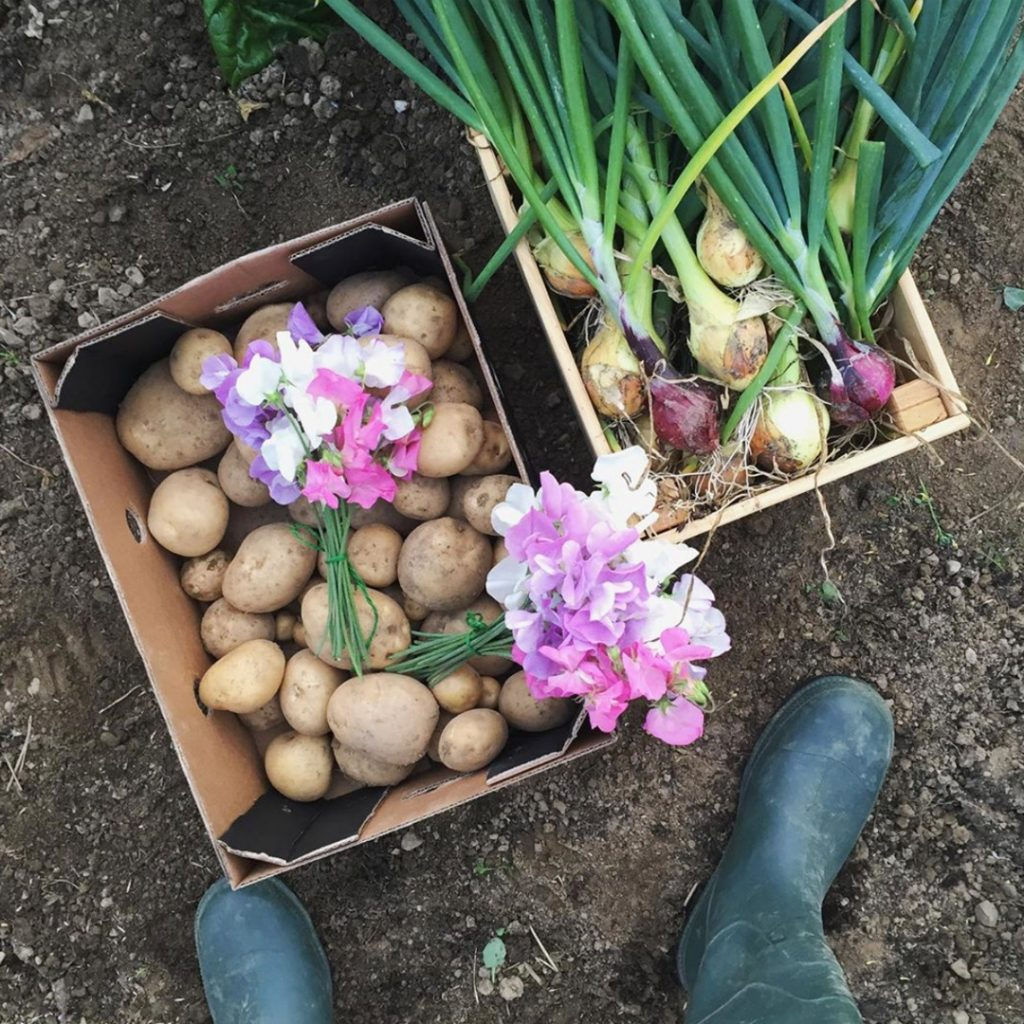 Potatoes Sweet Pea Flowers and Onions