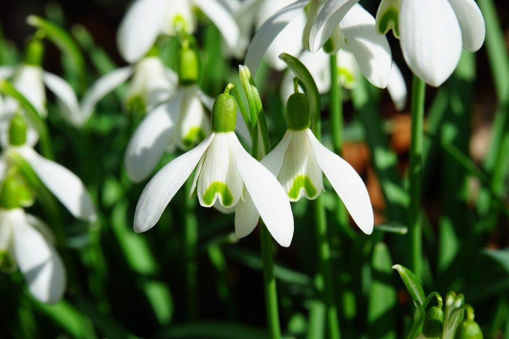 Beautiful Irish language flower names