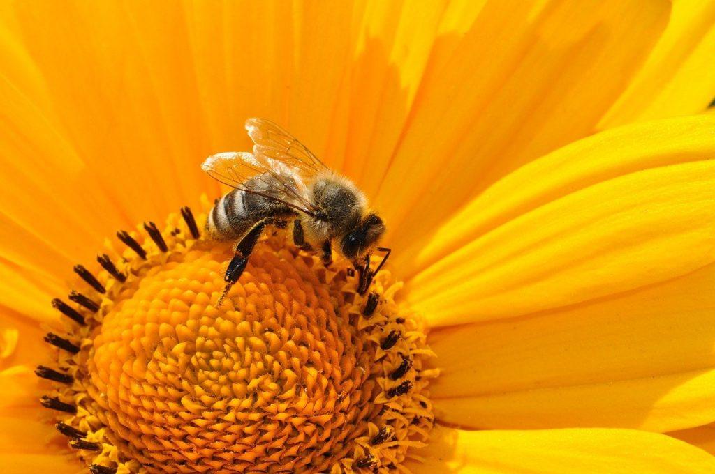 Plean Bee
